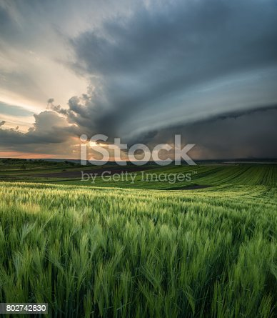istock Cyclone on the field. Beautiful natural landscape in the summer time 802742830
