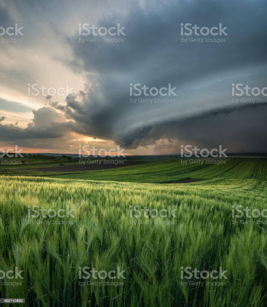 Cyclone on the field. Beautiful natural landscape in the summer time stock photo