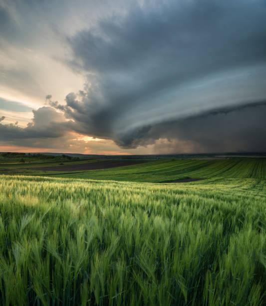 ciclone no campo. bela paisagem natural, no tempo de verão - tornado - fotografias e filmes do acervo