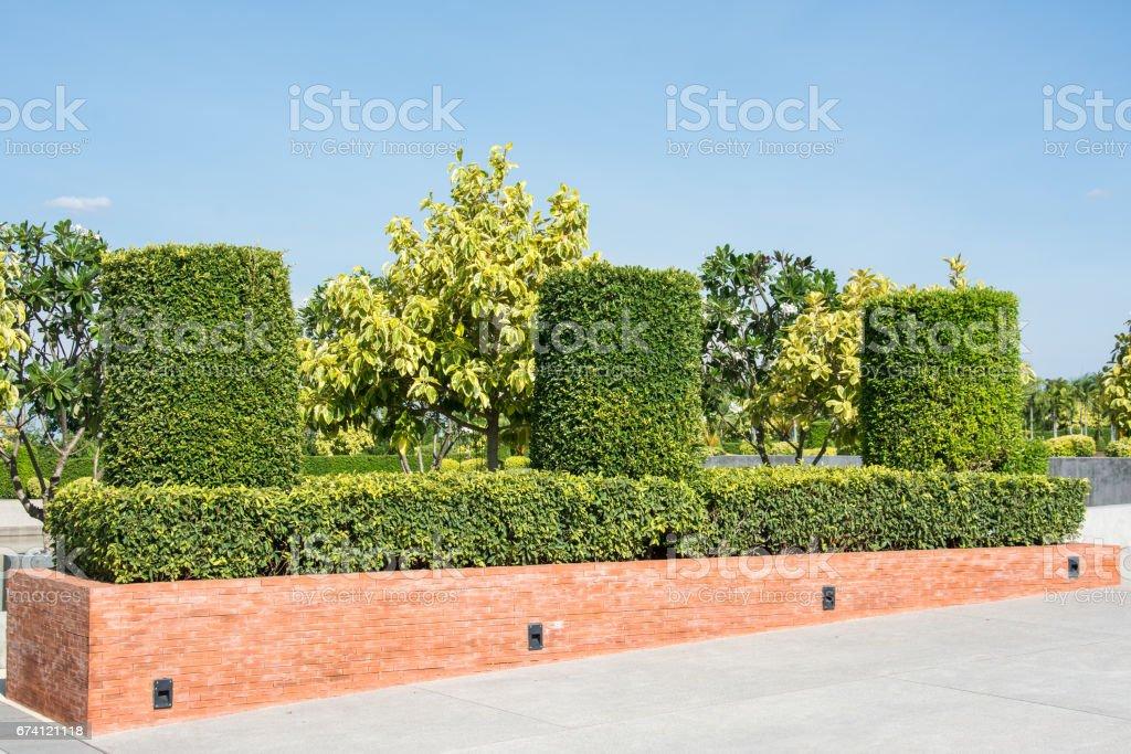在室外花園裡缸樹形狀 免版稅 stock photo