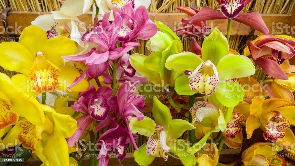 Cymbidium orchids in differnt colors stock photo