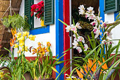 Cymbidium Orchids in flower pots in front of door