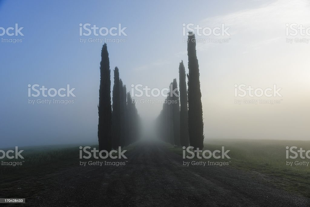 Cypress alley leading to a villa, in Tuscany/Italy royalty-free stock photo