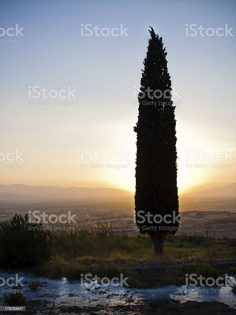 Cypress at sunset royalty-free stock photo