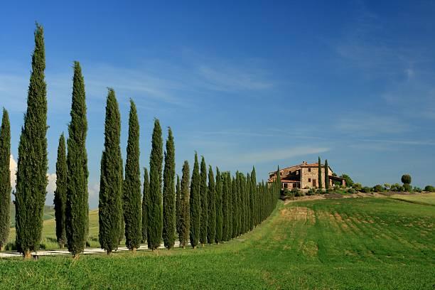 Cypress Avenue with Grange Tuscany stock photo