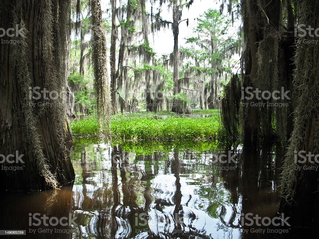 Cypress Bayou royalty-free stock photo