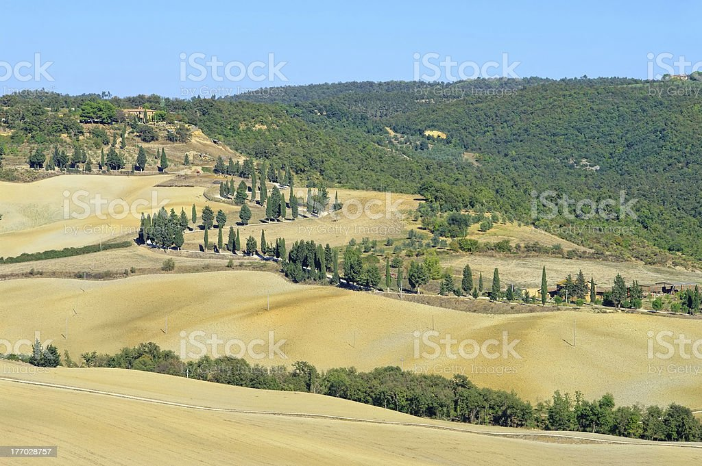 cypress curve in fall stock photo