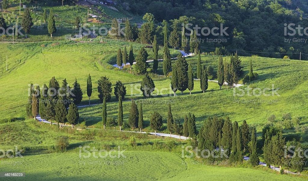 cypress curve stock photo