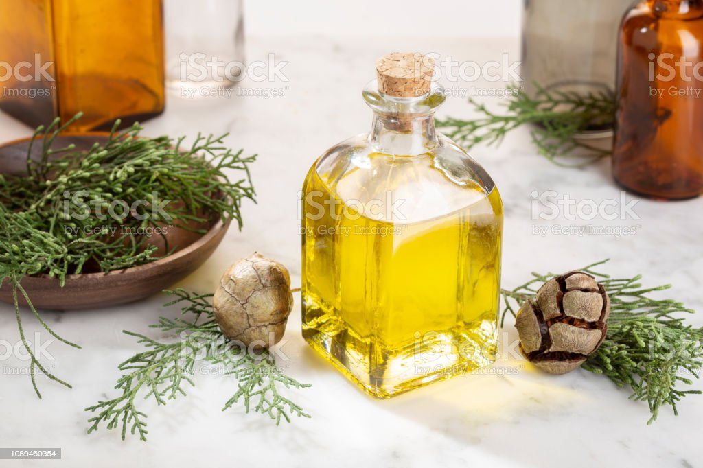Cypress essential oil stock photo
