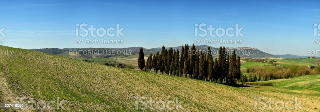 Cypress group and rolling field rural landscape in Orcia valley, San Quirico, Siena, Tuscany. Italy stock photo