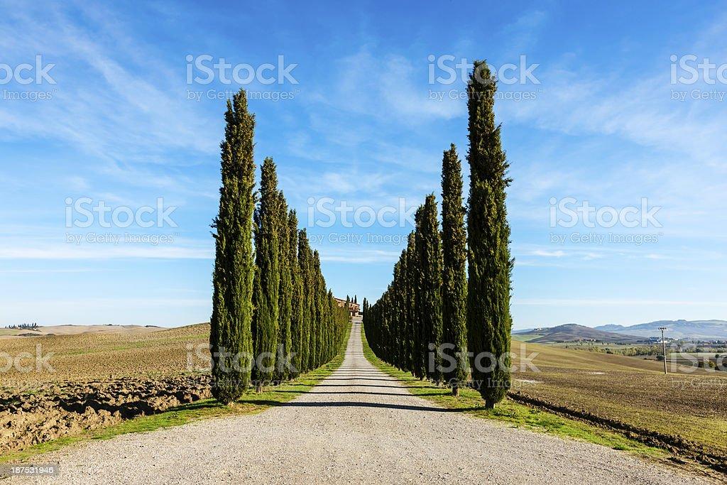 Cypress Lined Road, Tuscany, Italy stock photo