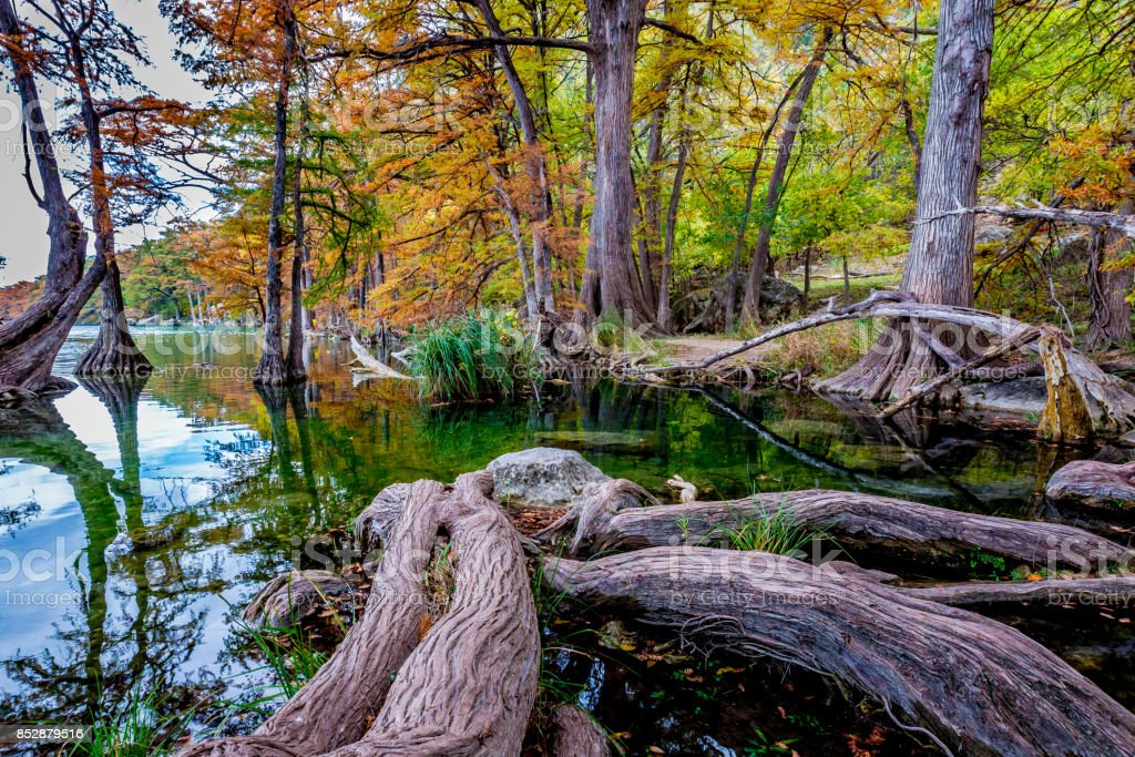 Cypress Roots at Garner State Park, Texas stock photo