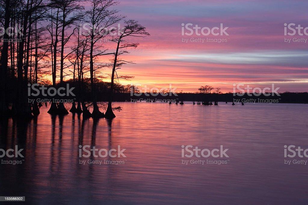 Cypress Sunset stock photo