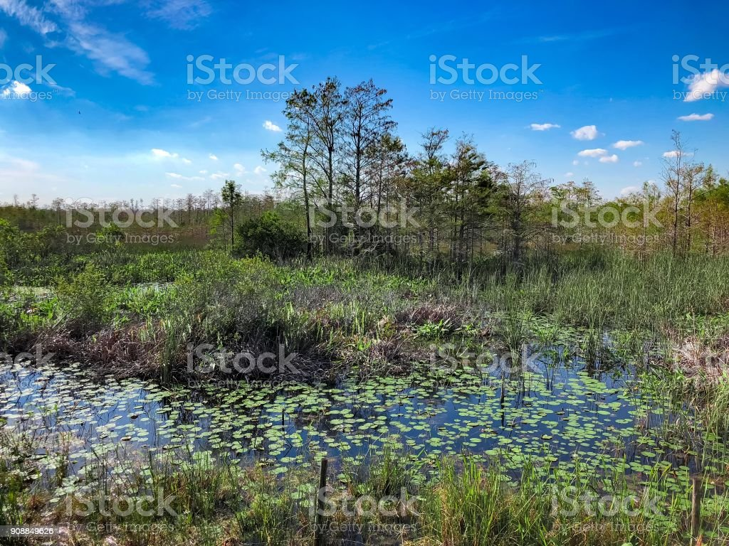 cypress swamp in Florida and a river stock photo
