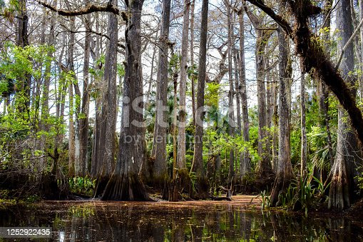 Image captured on the Loxahatchee River