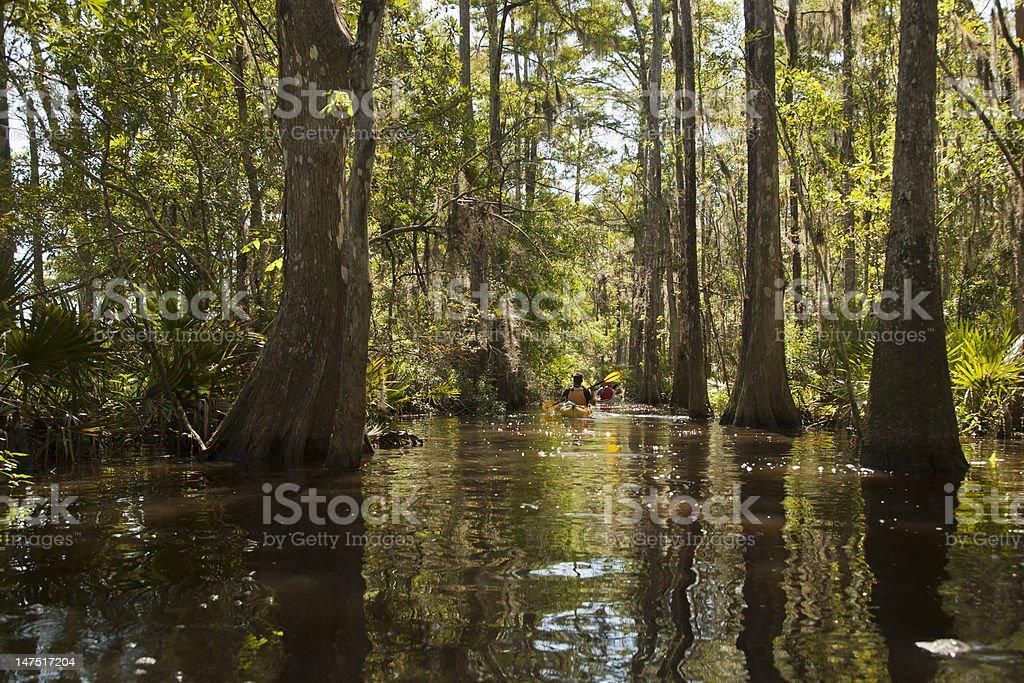 Cypress Trail Kayakers stock photo