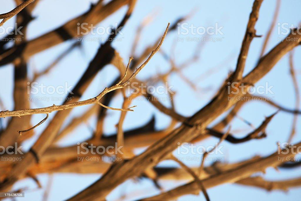 Cypress Tree Branch Sunrise Lighting Abstract stock photo