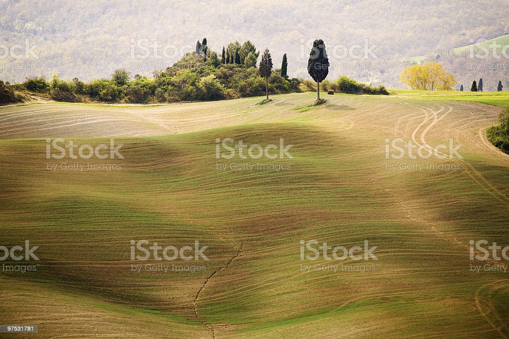 Cypress tree in the Tuscany near Pienza royalty-free stock photo