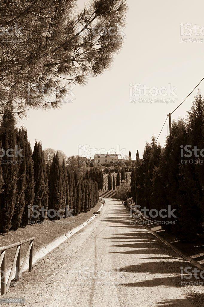 Cypress Tree Road on Tuscany Hill, Chianti - Florence royalty-free stock photo