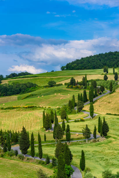 Cypress tree scenic winding road in Monticchiello - Valdorcia - near Siena, Tuscany, Italy, Europe. Cypress tree scenic winding road in Monticchiello - Valdorcia - near Siena, Tuscany, Italy, Europe. pienza stock pictures, royalty-free photos & images