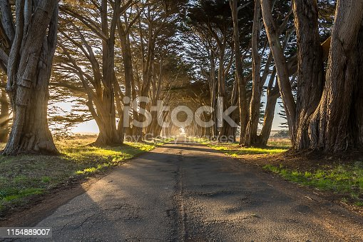 Dawn peaks through then openings of the Cypress Tree Tunnel in Point Reyes.