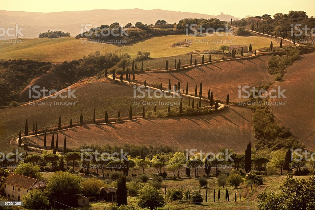 Cypress tree-lines up royalty-free stock photo