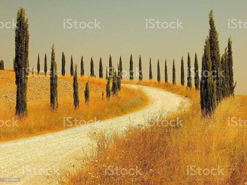 Cypress Trees Along Gravel Road in Tuscany, Italy royalty-free stock photo
