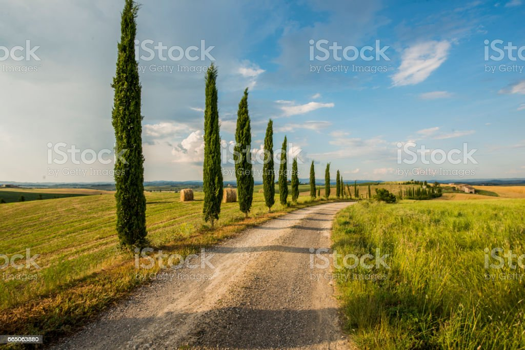 Cypress trees along the road in Tuscany stock photo