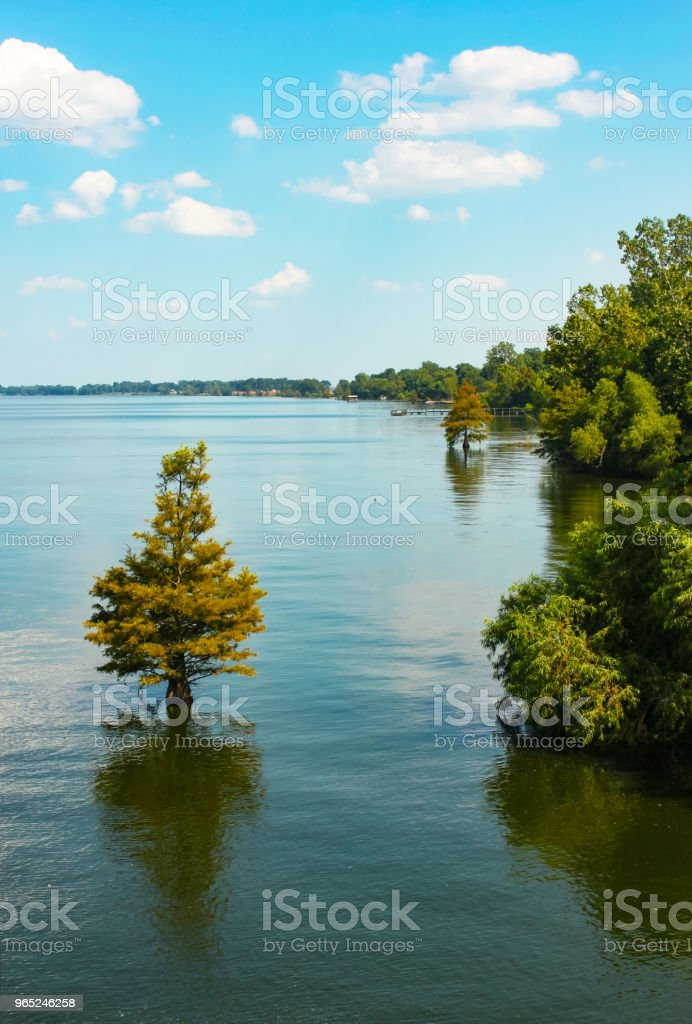 Cypress trees growing in high water on a lake with boat piers along the side zbiór zdjęć royalty-free