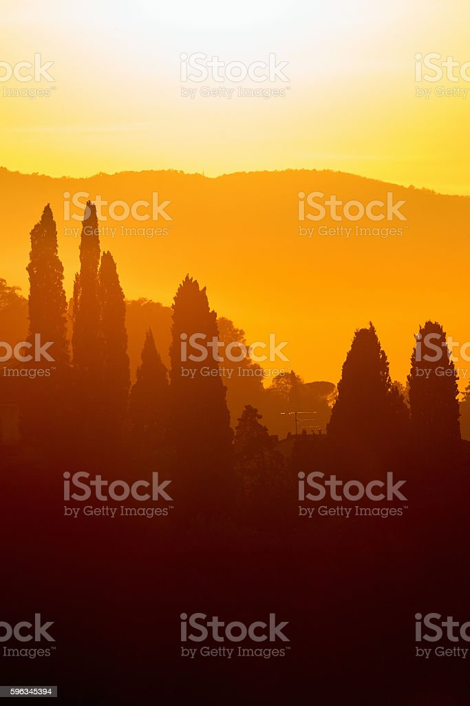 Cypress Trees in backlight at sunset royalty-free stock photo