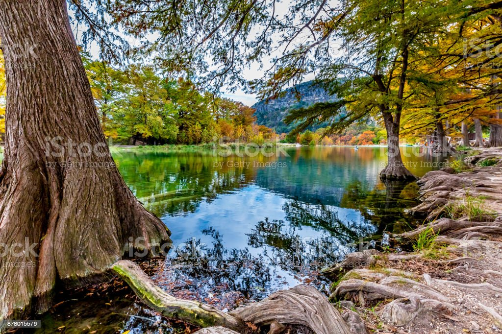 Cypress Trees in Garner State Park, Texas stock photo