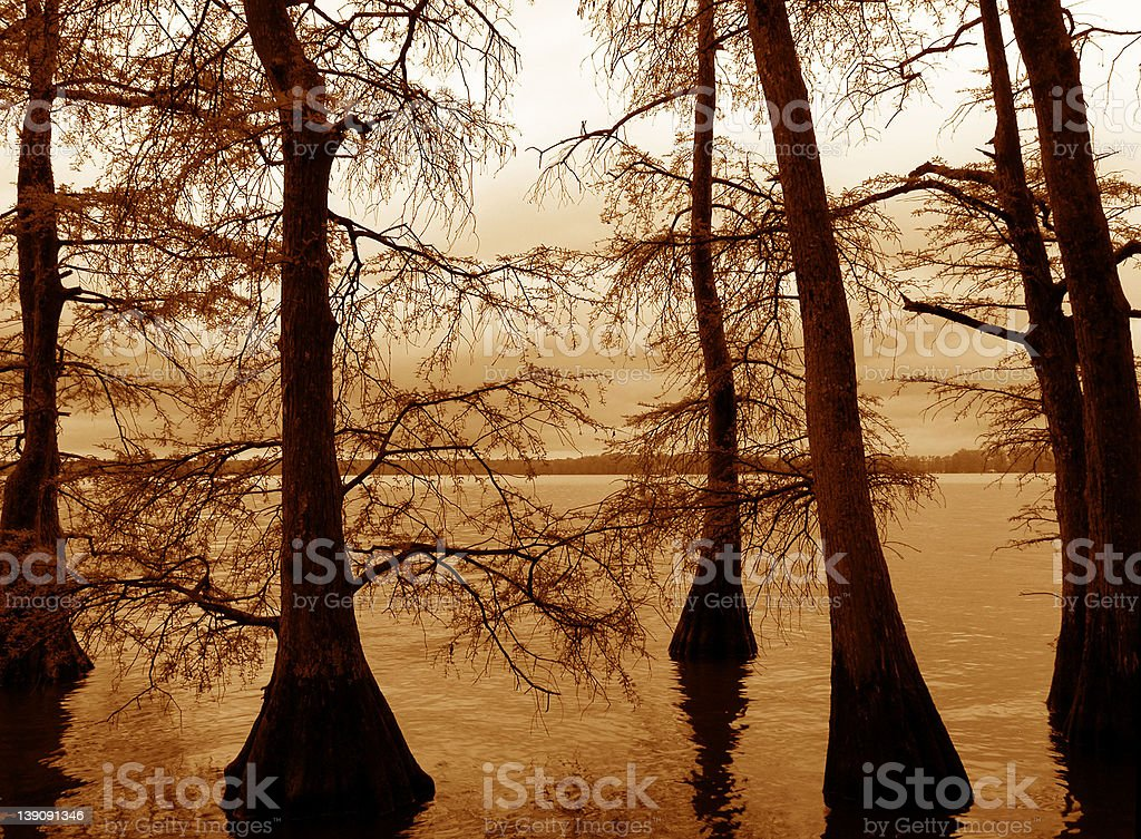 Cypress Trees in Reelfoot Lake stock photo