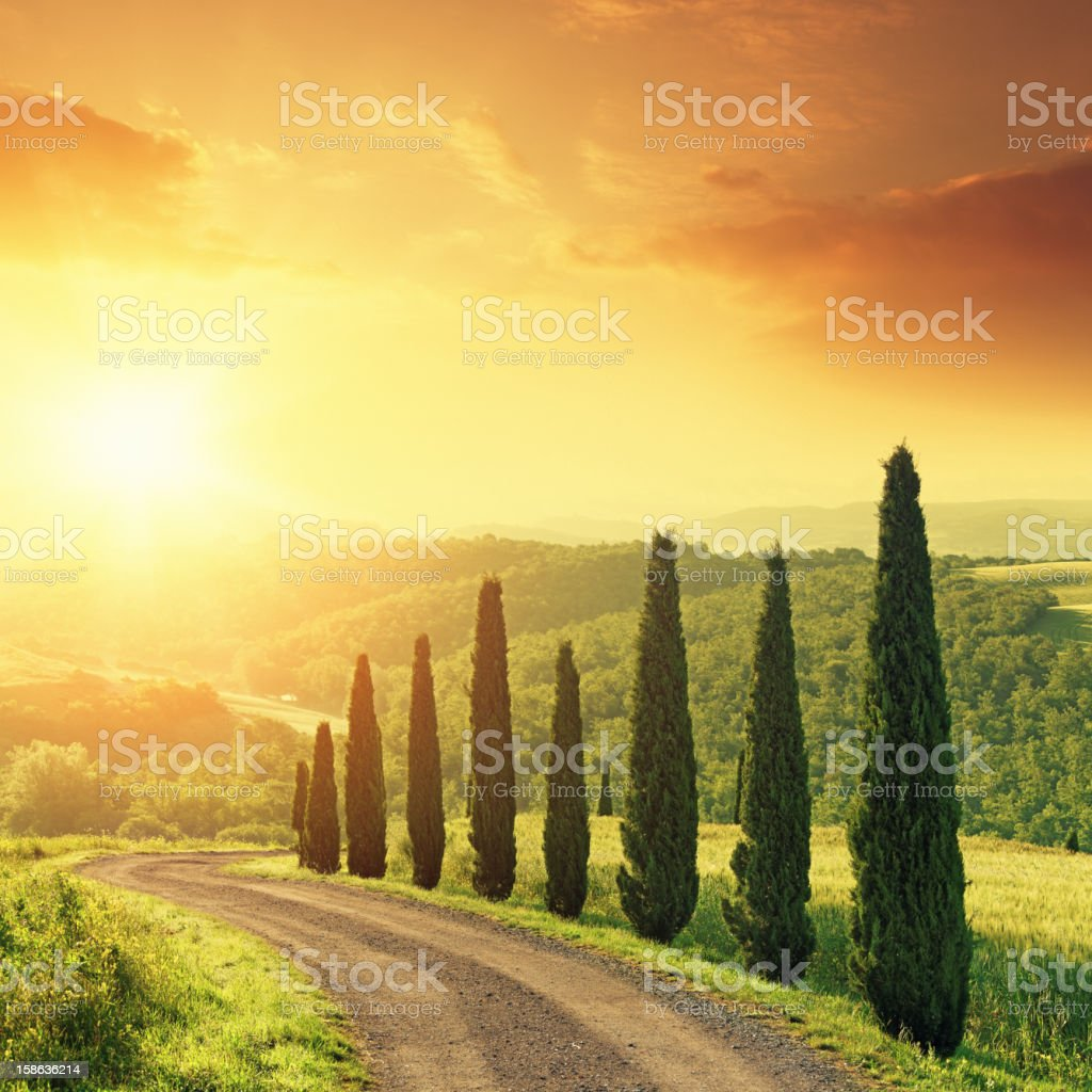 Cypress trees in Tuscany at sunrise stock photo