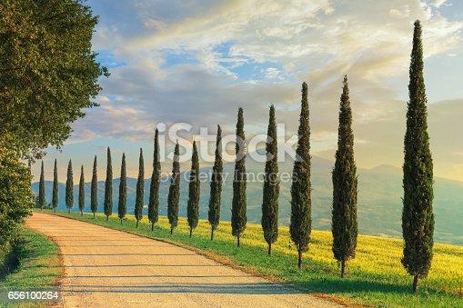istock Cypress trees in Tuscany, Italy 656100264