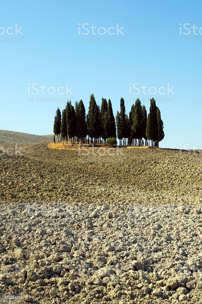 Cypress trees in tuscany royalty-free stock photo