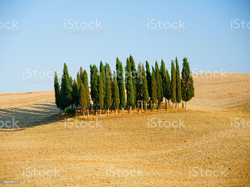 Cipressi in Toscana stock photo