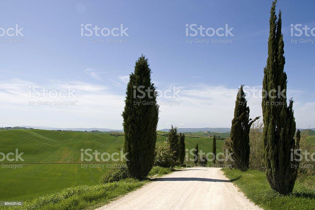 Zypressen in der Toskana Lizenzfreies stock-foto
