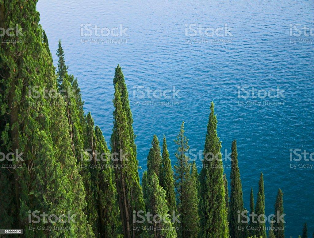 Cipressi foto stock royalty-free