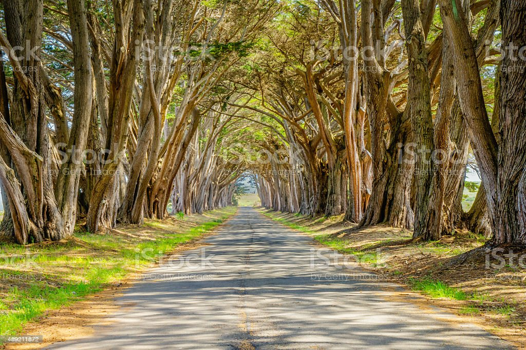 Cypress Tunnel at Point Reyes stock photo