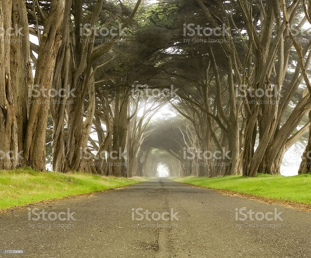 Cypress tunnel to mystery structure royalty-free stock photo