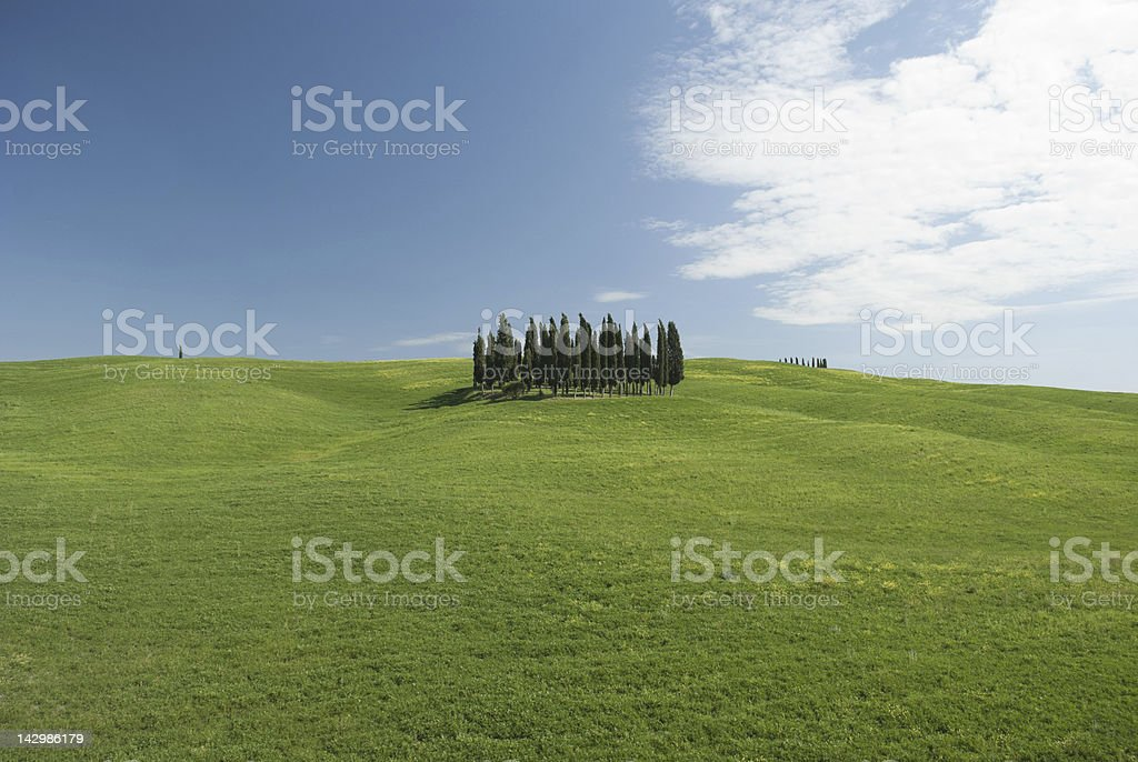 Cypresses blue sky and green field with copy space stock photo