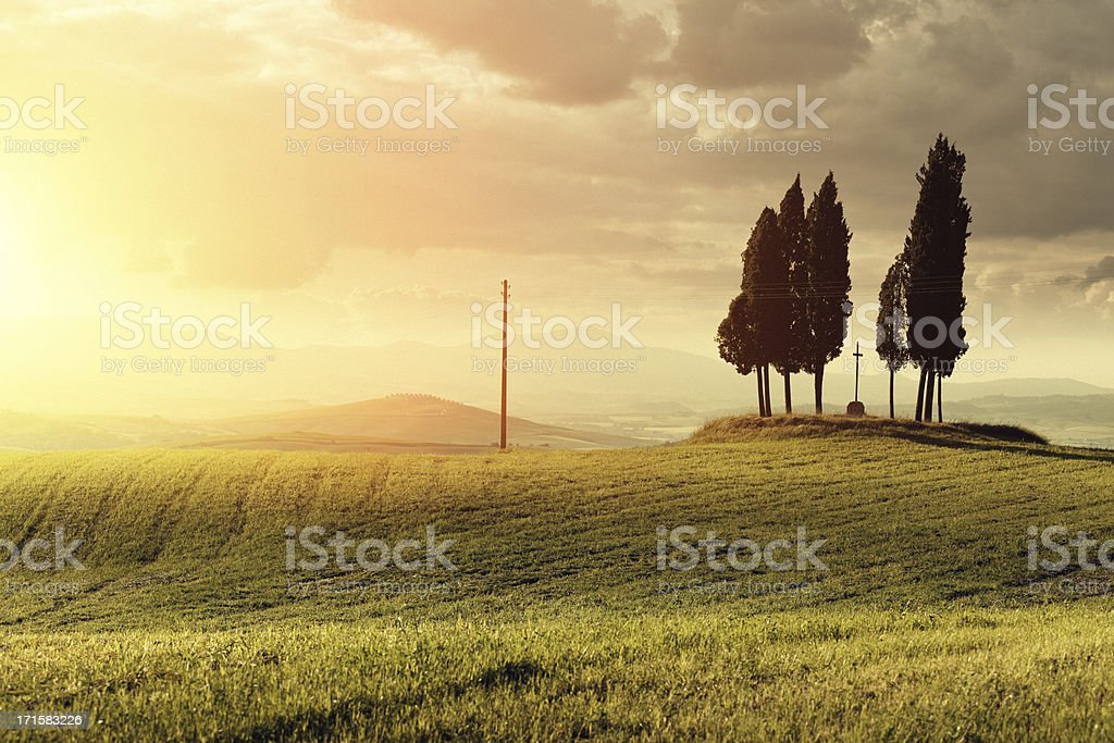 Cypresses in Tuscany royalty-free stock photo