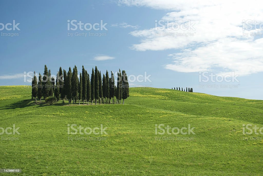 Cypresses in Tuscany with copy space royalty-free stock photo