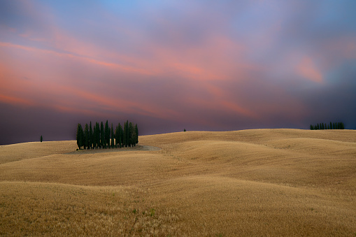 cypresses of San Quirico D'Orcia and wheat fields at sunset - Tuscany