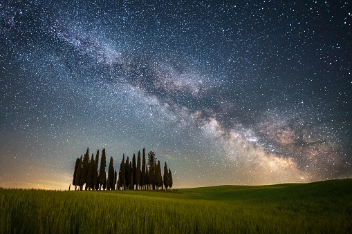 cypresses of San Quirico D'Orcia at night with milky way - Tuscany
