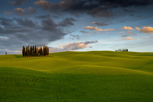 cypresses of San Quirico D'Orcia at sunset  - Tuscany