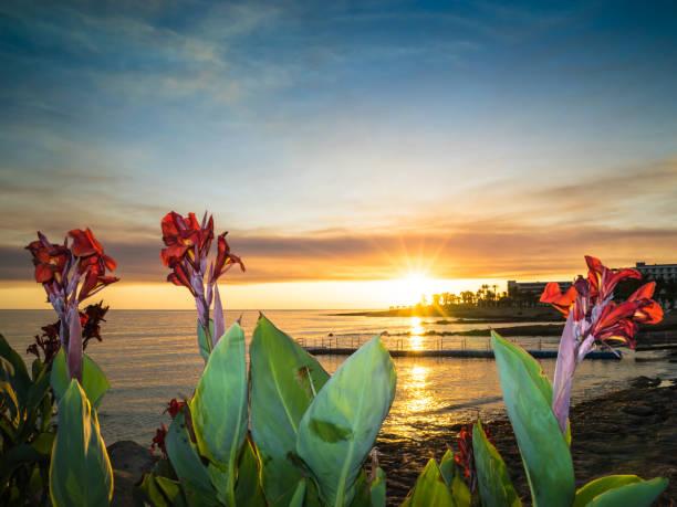 zypern-strand bei sonnenuntergang mit roten blüten, paphos - hochzeitsreise zypern stock-fotos und bilder