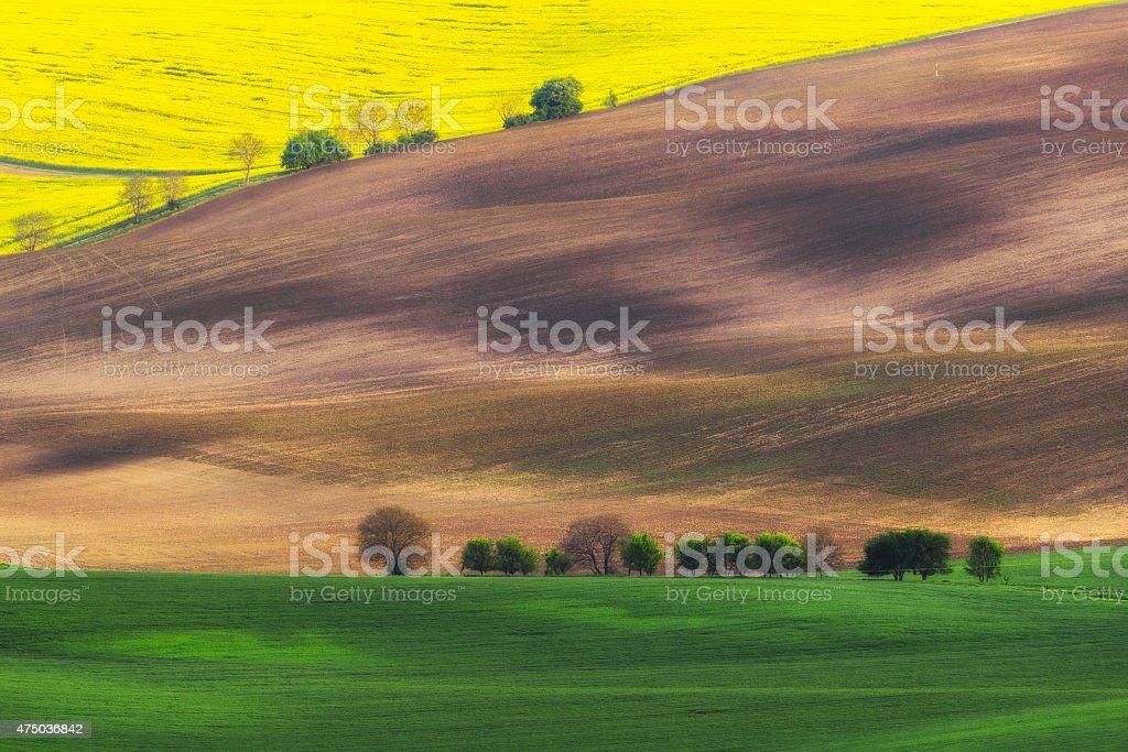Czech Republic. South Moravia. Moravian field, plowed land, rape stock photo