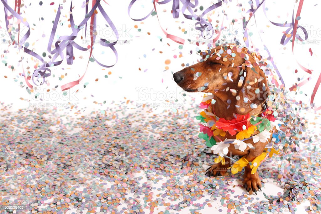 Dachshund at Carnival salon stock photo