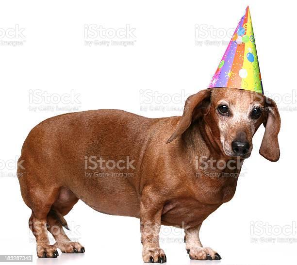Dachshund in a birthday hat picture id183287343?b=1&k=6&m=183287343&s=612x612&h=bsisvve1qw5p0nrrvg9qsqkkyhvowrfd5ahkagmo29w=